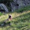 ours des Pyrenées