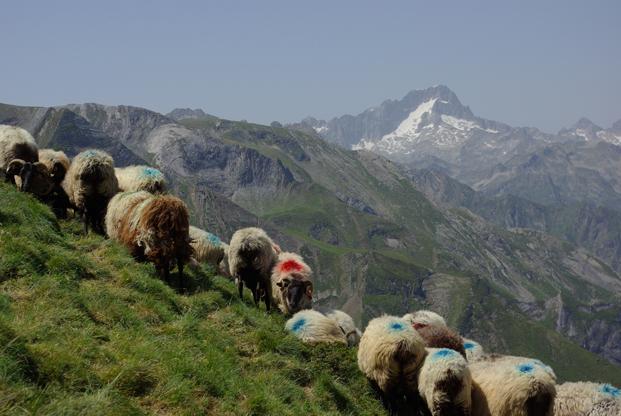 À la Saint Michel, bergers et moutons sont de la fête