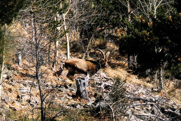 Le massif du Pibeste, Réserve Naturelle Régionale Midi-Pyrénées