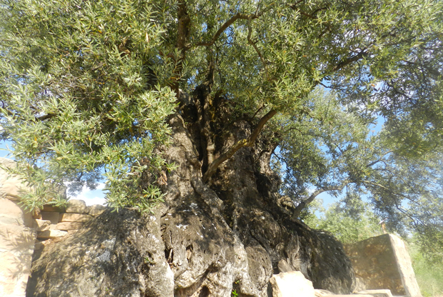 olivier de nadal guara