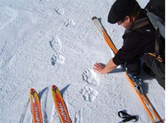mesurer-traces-ours-550x410