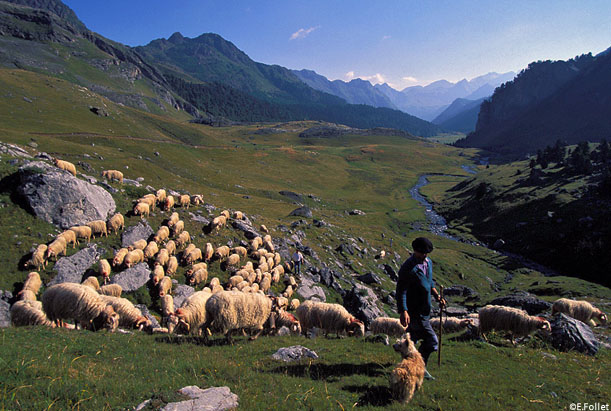 transhumance pyrenees